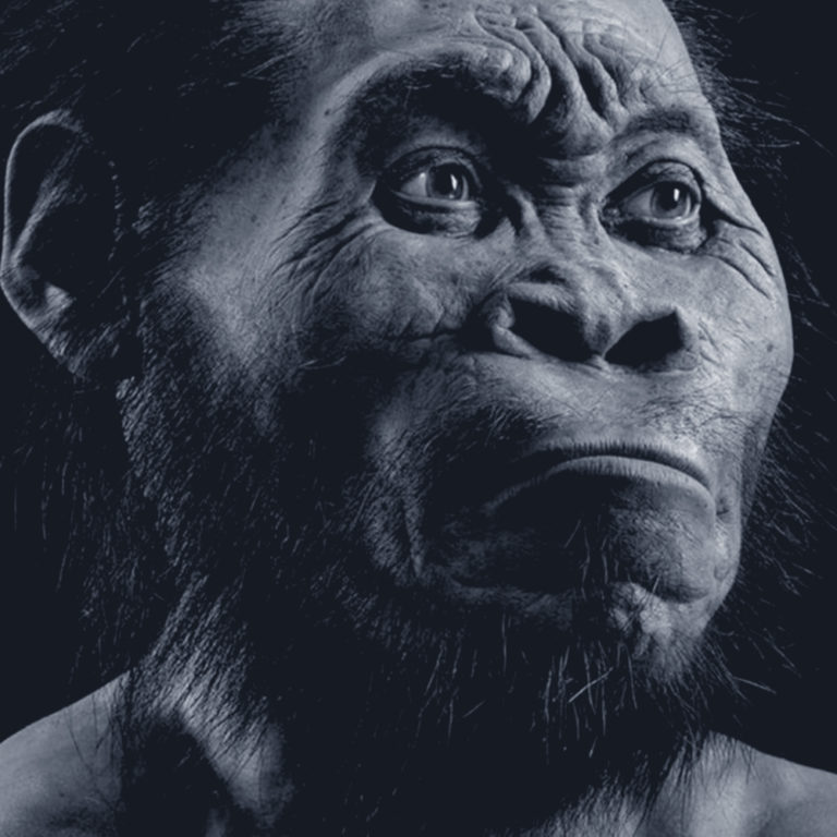 Hominin Species Homo Naledi Discovered